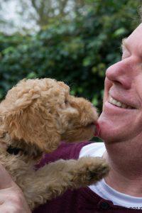 Labradoodle Geheimen Review. Foto van Piet de Jong met Labradoodle pup.